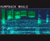 From Google: Whale Songs and AI, For Everyone to Explore