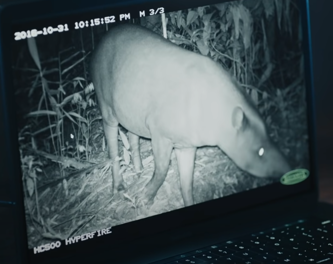From Google: Wildlife Insights – Saving Biodiversity With Tech and AI